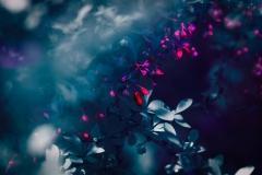 Selektive Farbänderung / Photoshop