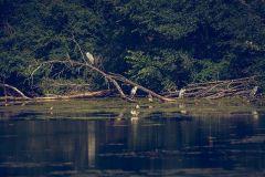 Mit dem Stocherkahn durch das Taubergiessen. Foto: Patrick Weniger