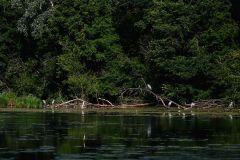 Mit dem Stocherkahn durch das Taubergiessen. Foto: Simone Weniger