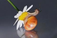 FS-B-Alexander_Kluch-Schnecke-auf-einer-Blume